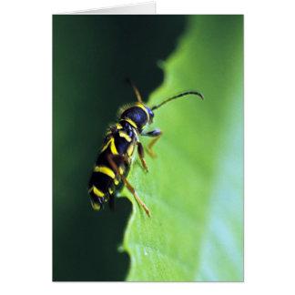 Wasp Beetle Card