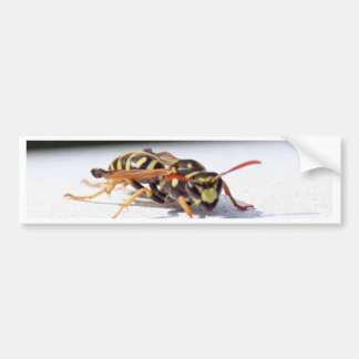 Wasp Car Bumper Sticker