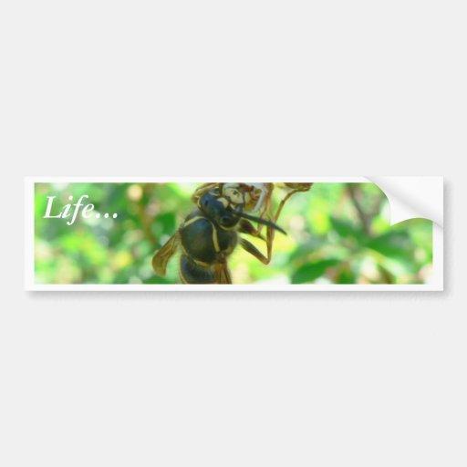 Wasp Bumper Sticker