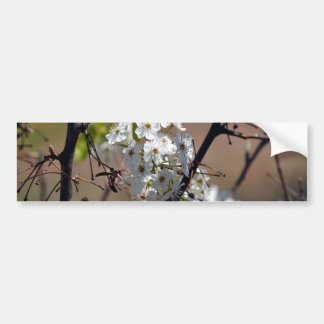 Wasp-in the BPT Flowers Bumper Sticker