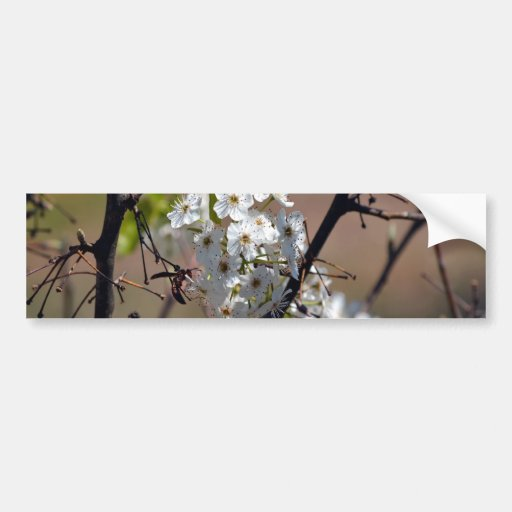Wasp-in the BPT Flowers Bumper Stickers