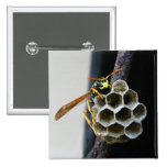 Wasp Nest and Worker Button