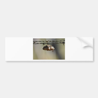 WASP NEST RURAL QUEENSLAND AUSTRALIA BUMPER STICKER