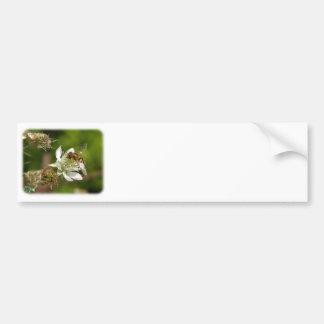 Wasp on a Bramble 9Y051D-019 Bumper Sticker