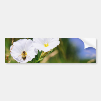 Wasp On A White Flower, Nature Photograph Bumper Sticker