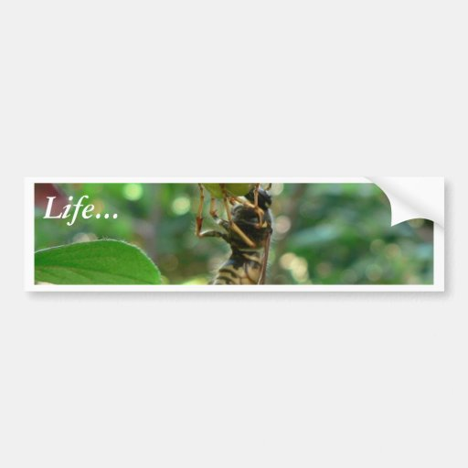 Wasp On Flower Bumper Stickers