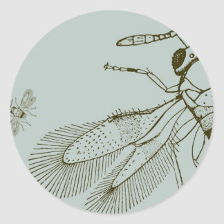 Wasps, Aspidiotiphagus Citrinus Classic Round Sticker