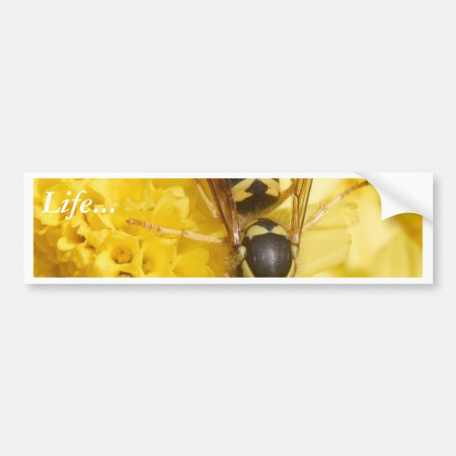 Wasps Bumper Stickers