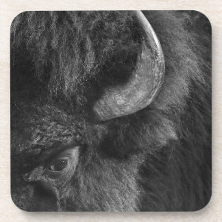 Watchful Eye of the Dominant Bull Bison Coaster