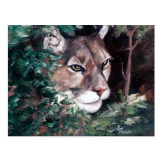Watching Cougar Postcard