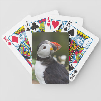 Watching his Back Puffin Card Deck