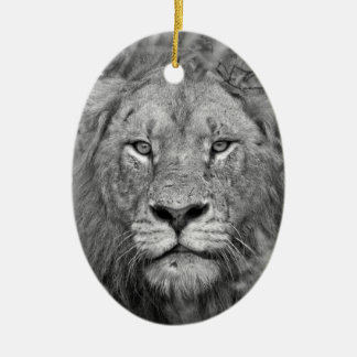 Watching Lion, South Africa Ceramic Oval Decoration