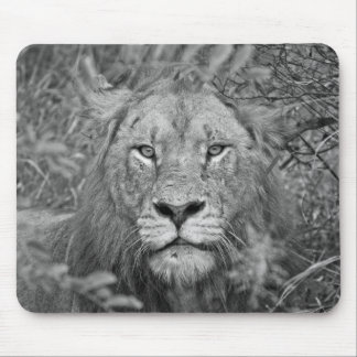 Watching Lion, South Africa Mouse Pad