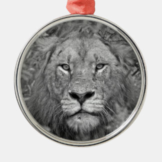 Watching Lion, South Africa Silver-Colored Round Decoration