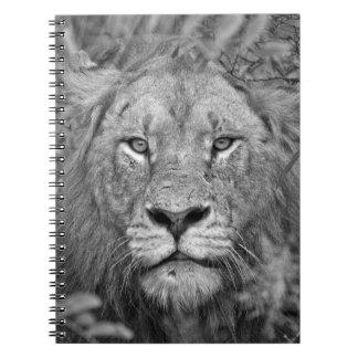 Watching Lion, South Africa Spiral Notebook
