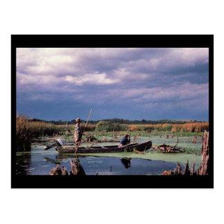 Watching Waterfowl Postcard