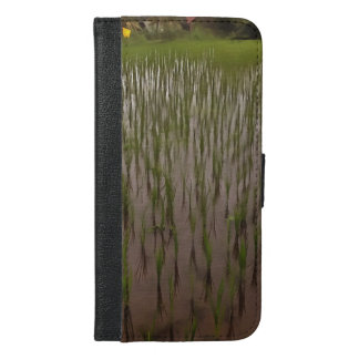 Water and paddy field
