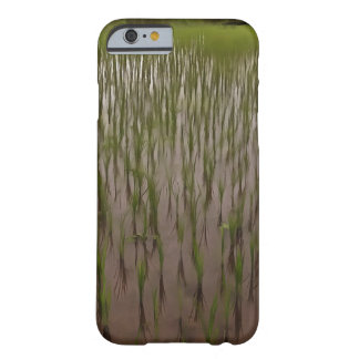 Water and paddy field barely there iPhone 6 case