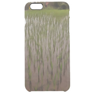 Water and paddy field clear iPhone 6 plus case