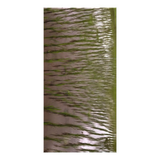 Water and paddy field customised photo card
