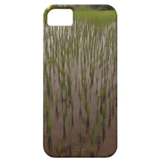 Water and paddy field iPhone 5 cases