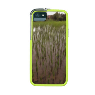Water and paddy field iPhone 5 covers