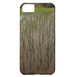 Water and paddy field iPhone 5C case