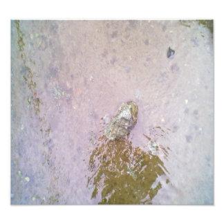 Water and Stone.jpg Photo