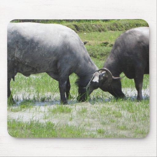 Water Buffalo Butting Heads Mousepad