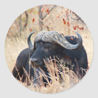water buffalo classic round sticker