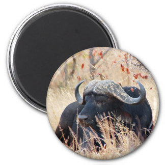 water buffalo magnet
