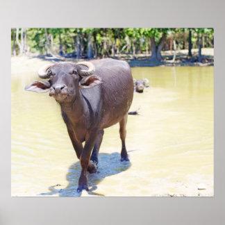 Water Buffalo Photograph Poster