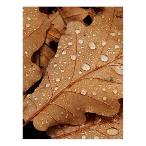 Water Drop Autumn Leaf Fall Nature Forest Destiny Post Cards