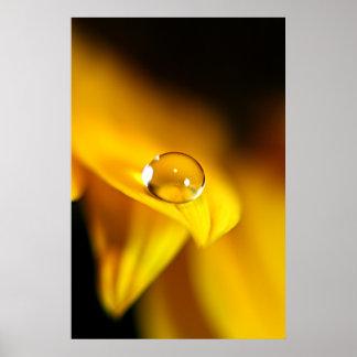 Water Drop on Sunflower Petal Poster
