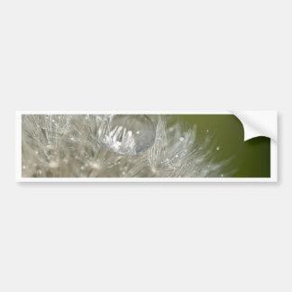 Water droplet on a dandelion bumper sticker