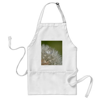 Water droplet on a dandelion standard apron