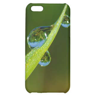 Water Droplets on a Green Blade of Grass Case For iPhone 5C