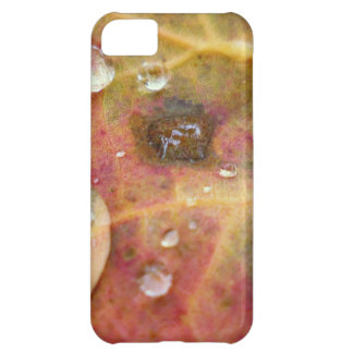 Water Droplets on Autumn Leaf iPhone 5C Case