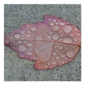 Water Drops Leaf Poster