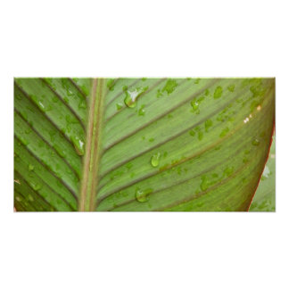 Water Drops on Leaf Photo Poster