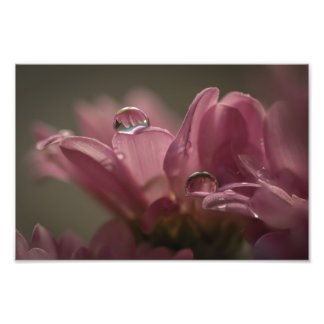 WATER DROPS ON PINK PETALS by Michelle Diehl Art Photo