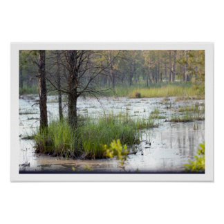 Water Grasses Trees Photo Poster