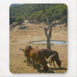 Water Hole Mouse Pad