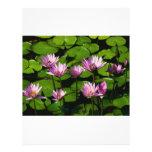 Water lilies flyer design