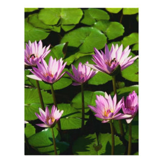 Water lilies full color flyer