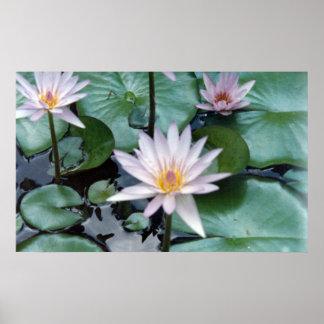 Water Lilies II Print