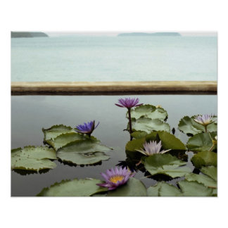 Water lilies in pond by ocean poster