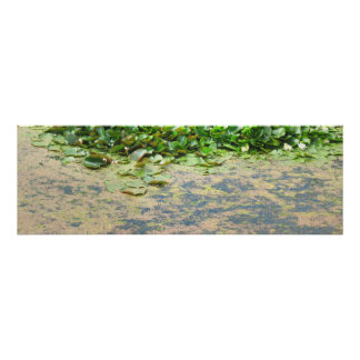Water Lilies Lilypads Poster