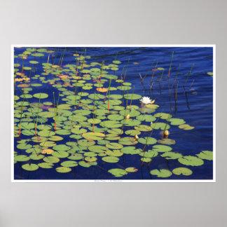 Water Lilies - Monet's Dream Poster