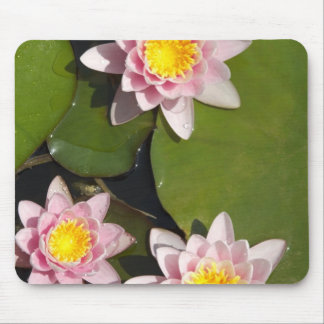 Water lilies mouse mat